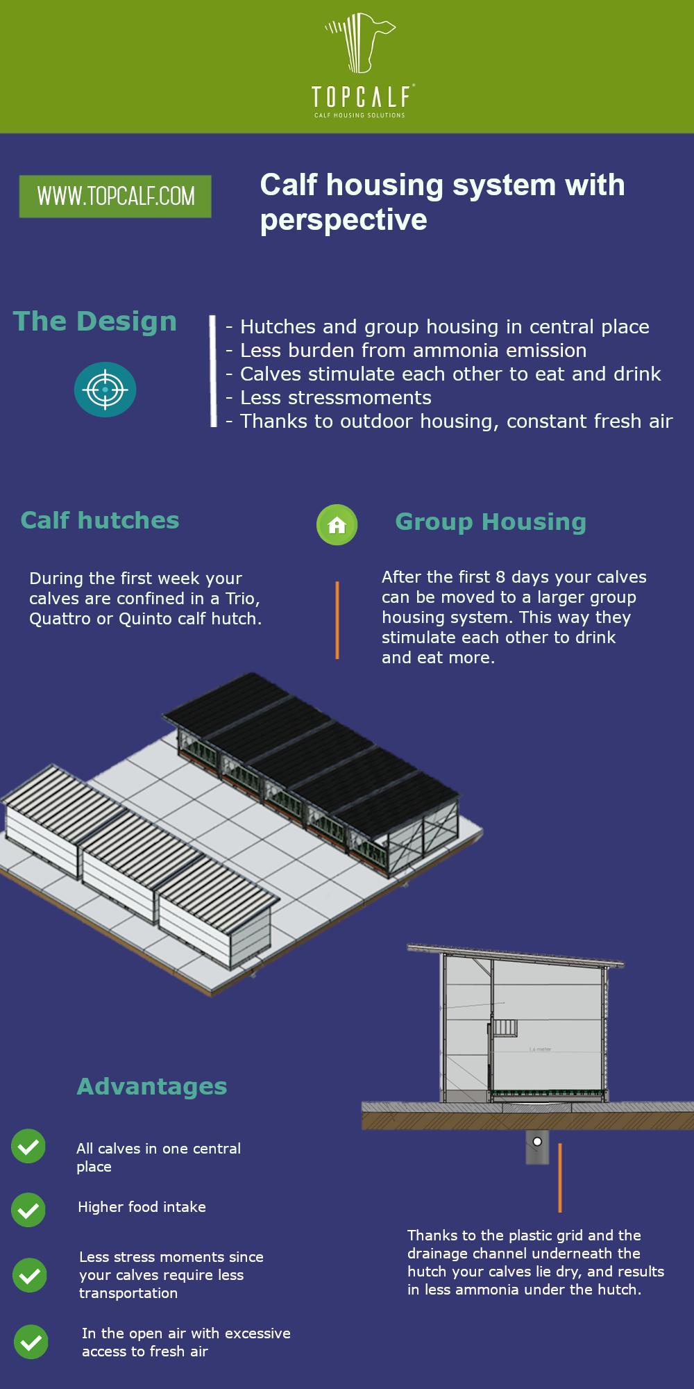 Calf housing system design