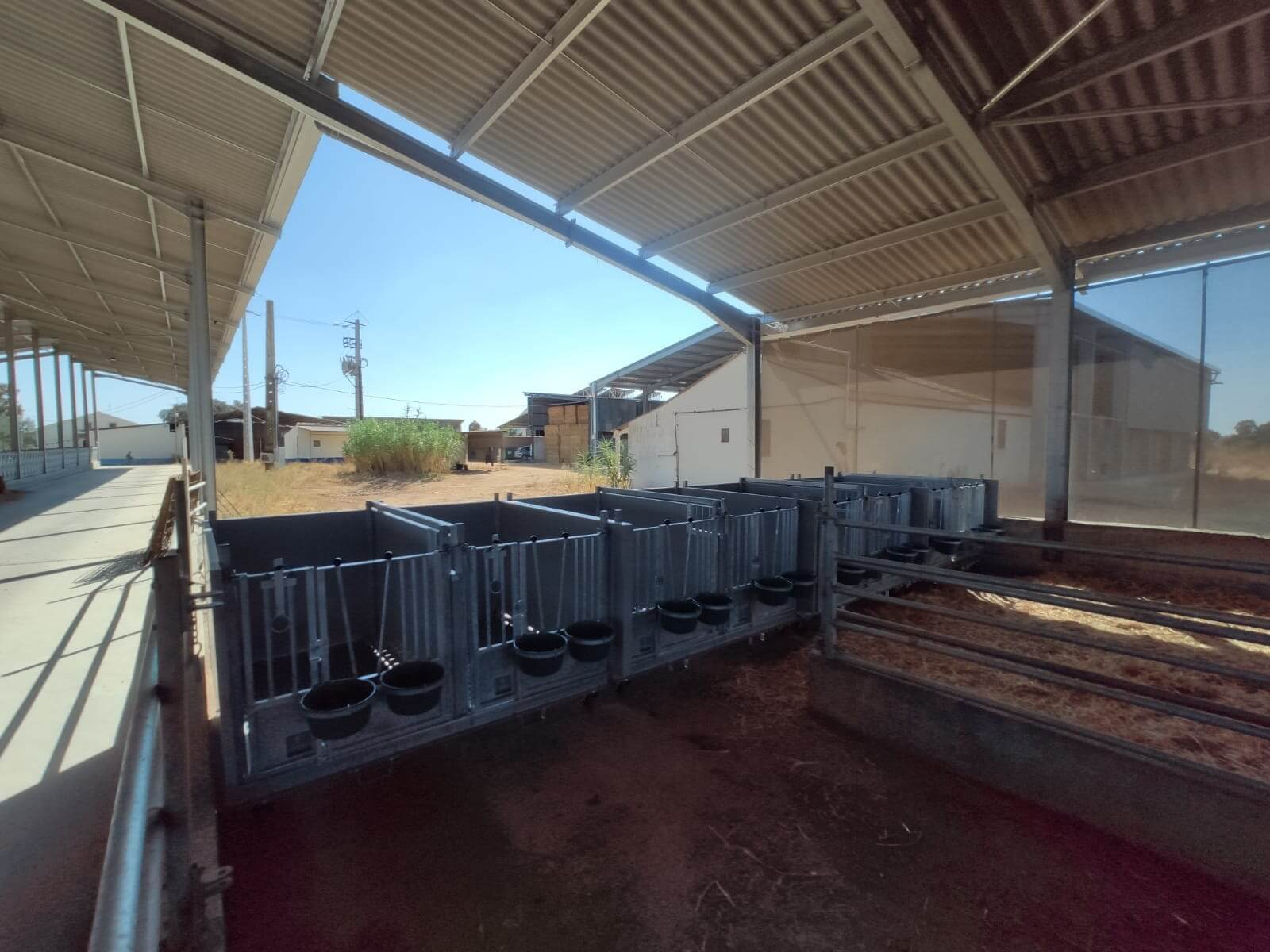 Double calf hutches in portugal