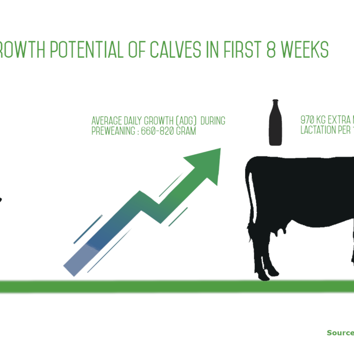 Growth potential of cattle in first 8 weeks
